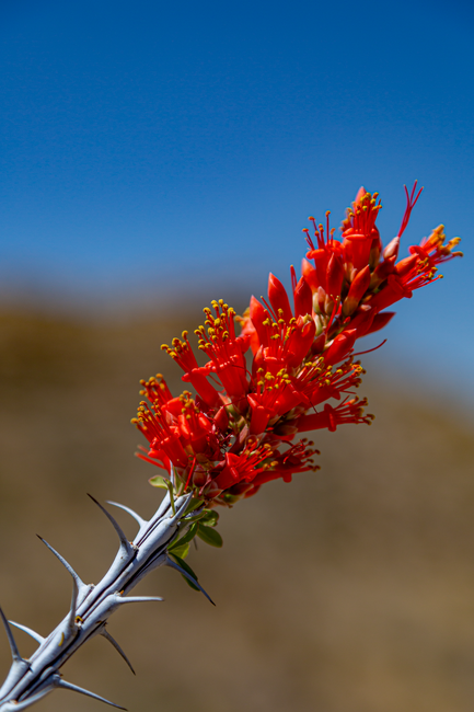 Click image for larger version  Name:Catus Flower Bokeh.png Views:7 Size:3.36 MB ID:55906