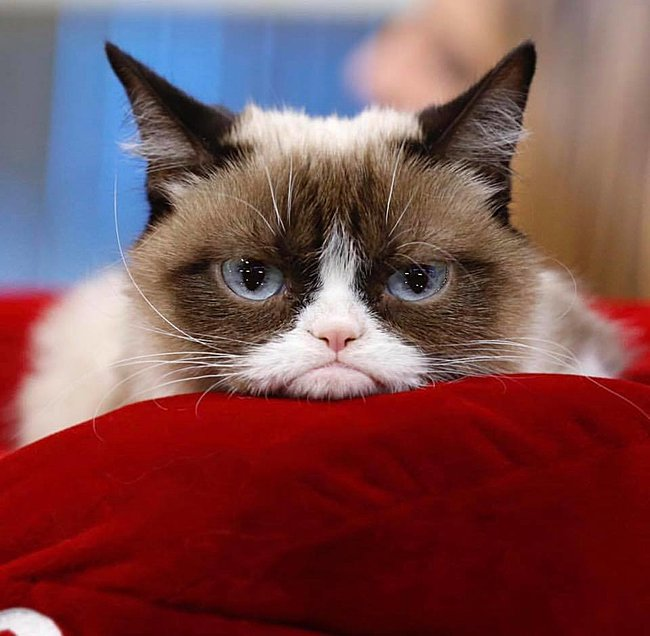 Click image for larger version  Name:grumpycat.jpg Views:2 Size:61.3 KB ID:26418