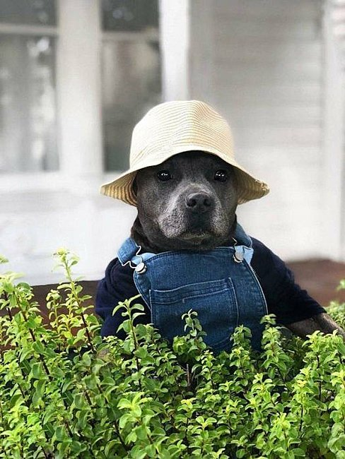 Click image for larger version  Name:farmer dog.jpg Views:4 Size:72.1 KB ID:19700