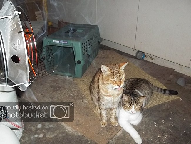 Click image for larger version  Name:fredthecat.jpg Views:2 Size:390.1 KB ID:24969