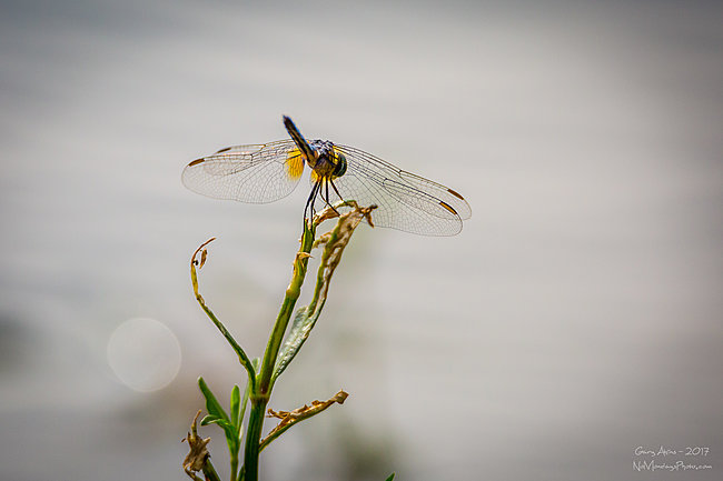 Click image for larger version  Name:Dragon Fly-9834.JPG Views:2 Size:620.4 KB ID:17418