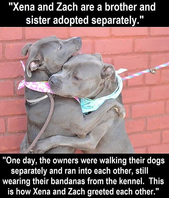 Click image for larger version  Name:bandanasfromkennel.jpg Views:6 Size:80.7 KB ID:30288